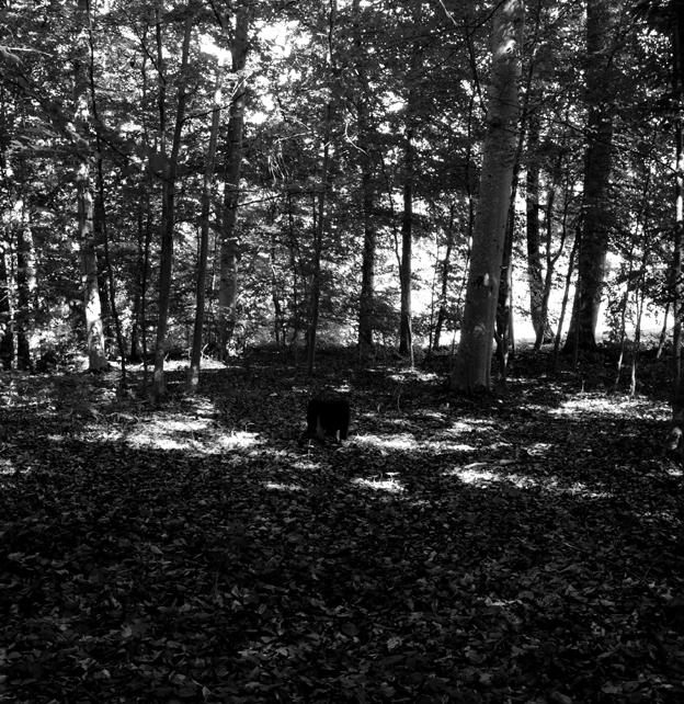 Spot - bokskog 2007, 50x50 cm analogt fotografi