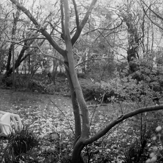 3.garden2
