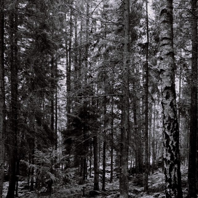 skog4